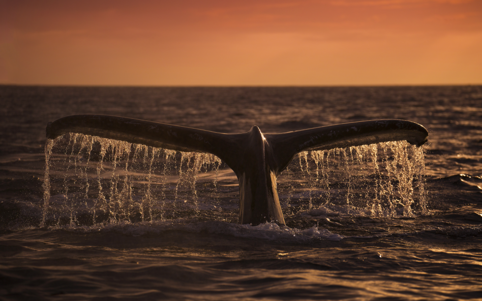 Whales 'Manufactured' Dump to Accumulate More BTC